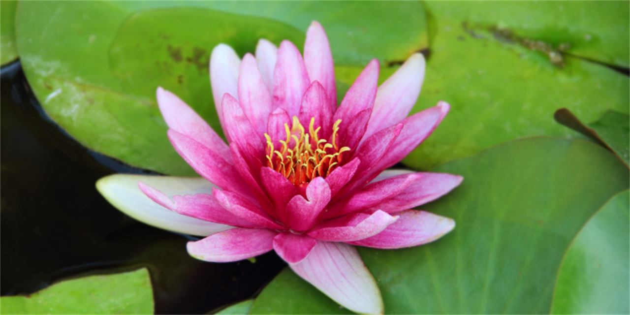 Mindfulness Meditation Event Logo