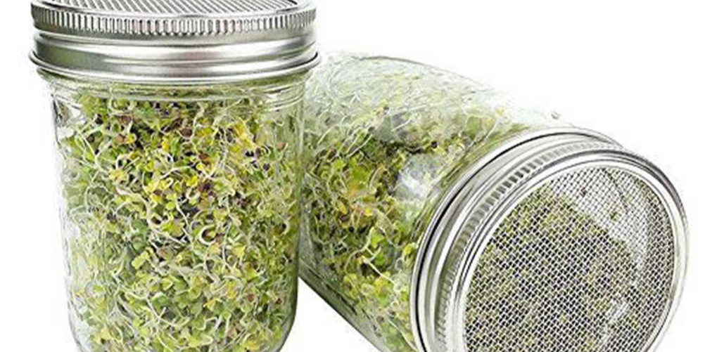 DIY: Sprouts in a Jar
