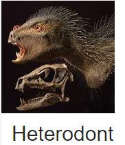 Screen capture from the Wikipedia page for the Heterodontosaurus. The head and fossilized skull of a heterodontosaurus is on a black background, and the caption below the image is cropped to say heterodont.