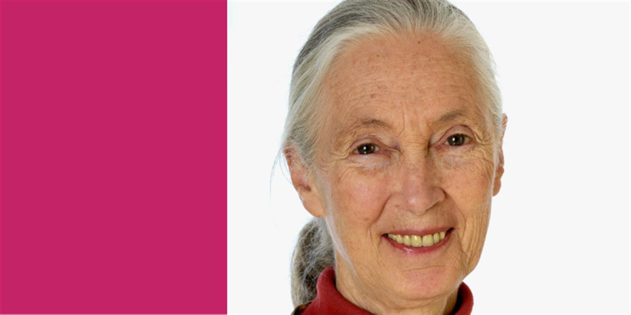 Tisch College Distinguished Speaker Series: Jane Goodall Event Logo