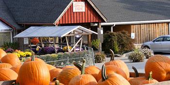 PILS Pumpkin Patch Outing Event Logo