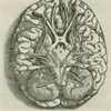 Brain Interest Group's logo