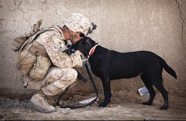 Marine and Dog