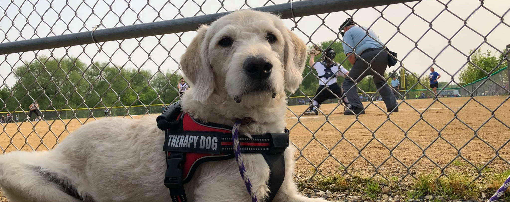 Frannie, the Therapy Dog, lays outside at a ball field