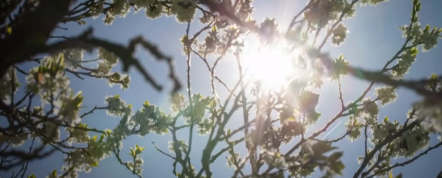 Sun peeking behind tree branches